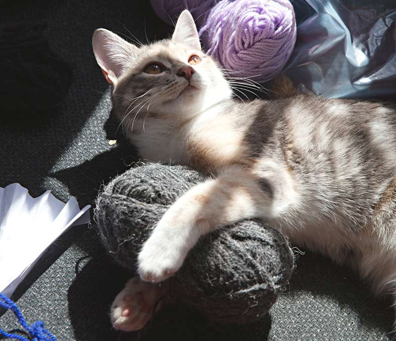 The Yarn Queen - Boutique Stockists of Quality Knitting Yarn